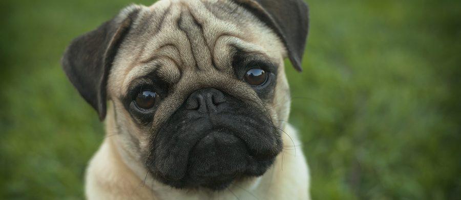 Home Care Services in La Jolla CA: Dementia Dogs